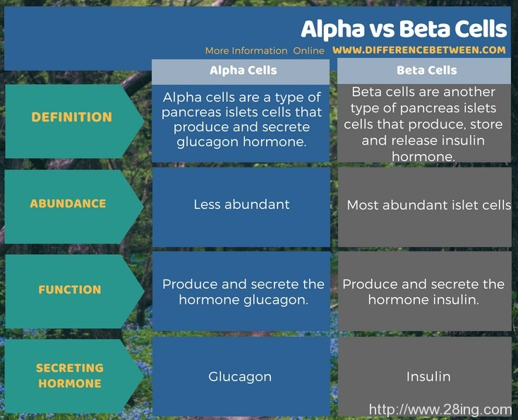 Difference Between Alpha and Beta Cells l Alpha vs Beta Cells