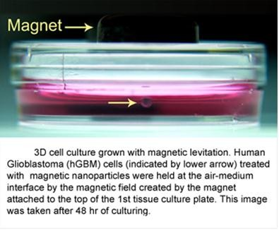 Difference Between 2D and 3D Cell Culture l 2D vs 3D Cell Culture