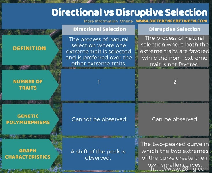 Difference Between Directional and Disruptive Selection l Directional vs Disruptive Selection