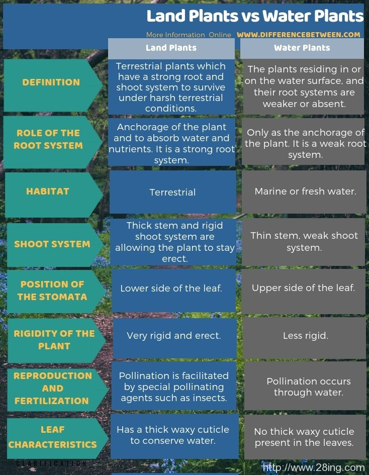 Difference Between Land Plants and Water Plants l Land Plants vs Water Plants