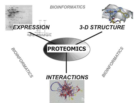 Difference Between Proteomics and Transcriptomics | Proteomics vs Transcriptomics