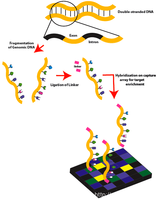 Difference Between Whole Genome Sequencing and Exome Sequencing l Whole Genome Sequencing vs Exome Sequencing