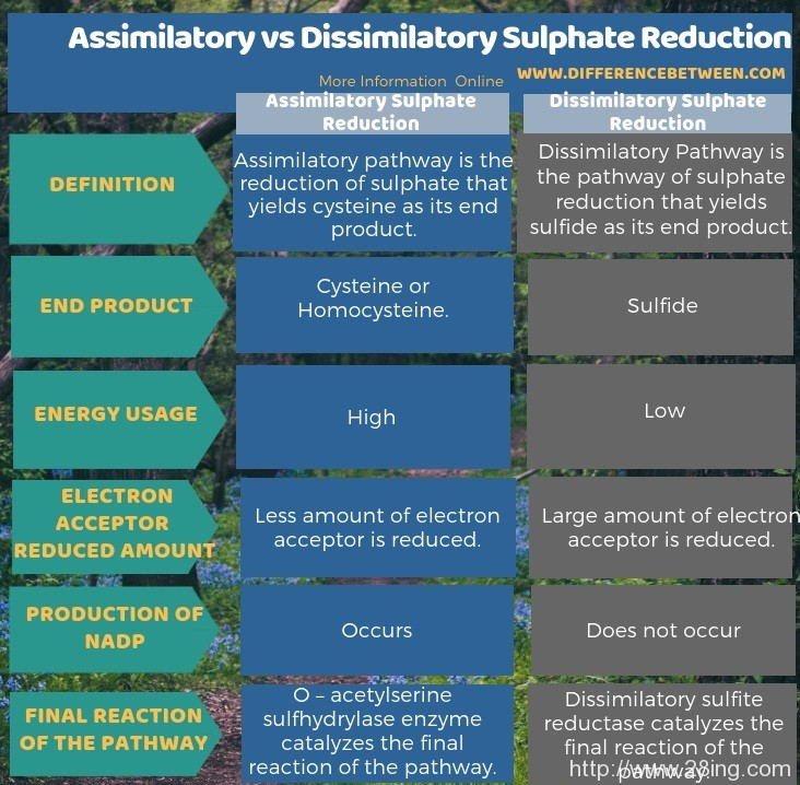 Difference Between Assimilatory and Dissimilatory Sulphate Reduction l Assimilatory vs Dissimilatory Sulphate Reduction
