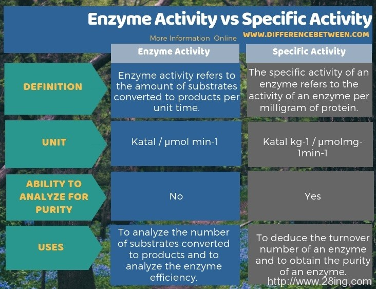 Difference Between Enzyme Activity and Specific Activity l Enzyme Activity vs Specific Activity