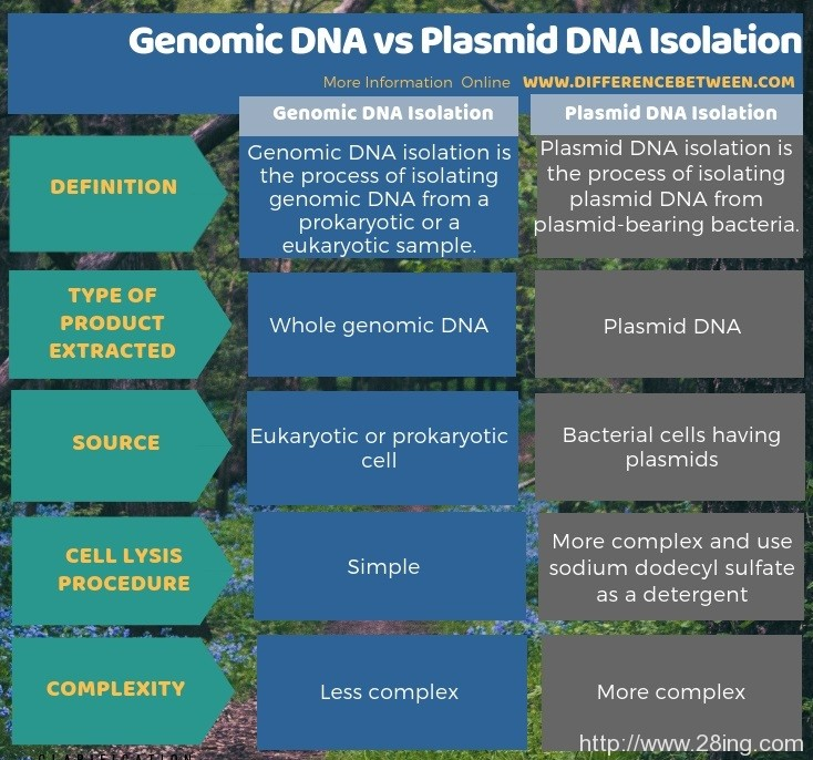 Difference Between Genomic DNA and Plasmid DNA Isolation l Genomic DNA vs Plasmid DNA Isolation