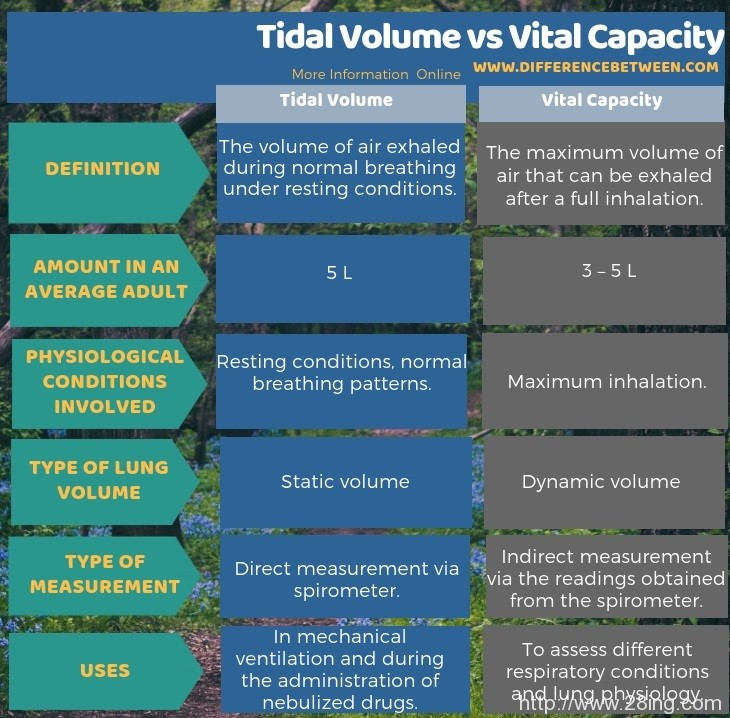 Difference Between Tidal Volume and Vital Capacity l Tidal Volume vs Vital Capacity