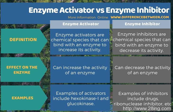 Difference Between Enzyme Activator and Enzyme Inhibitor | Enzyme Activator vs Enzyme Inhibitor