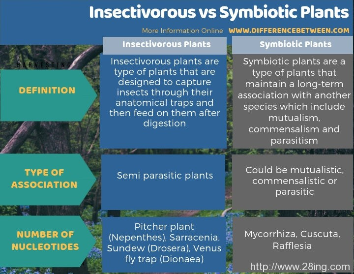 Difference Between Insectivorous and Symbiotic Plants | Insectivorous vs Symbiotic Plants