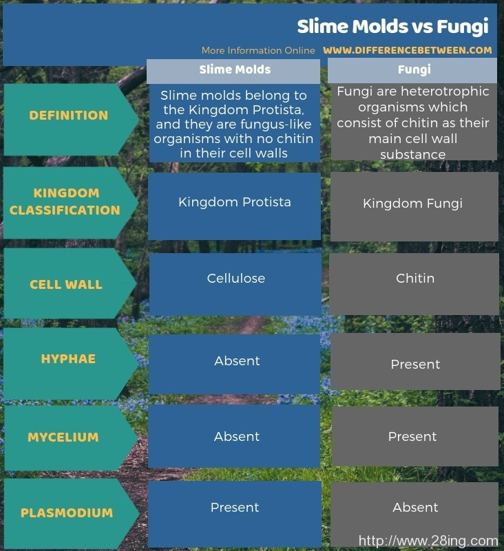 Difference-Between-Slime-Molds-and-Fungi-Slime-Molds-vs-Fungi2