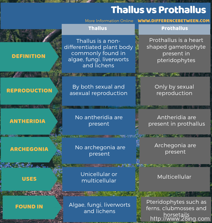 Difference-Between-Thallus-and-Prothallus-Thallus-vs-Prothallus