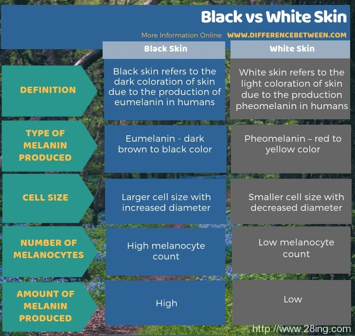 Difference Between Black and White Skin | Black vs White Skin